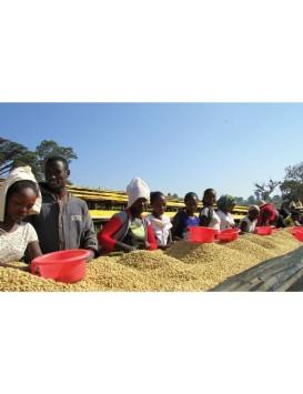 CAFE ETHIOPIE SIDAMA NYALA
