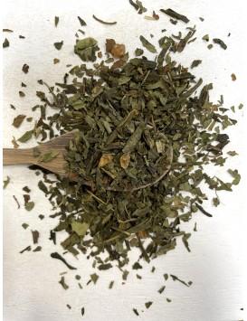 Thé vert - Bêtise de thé